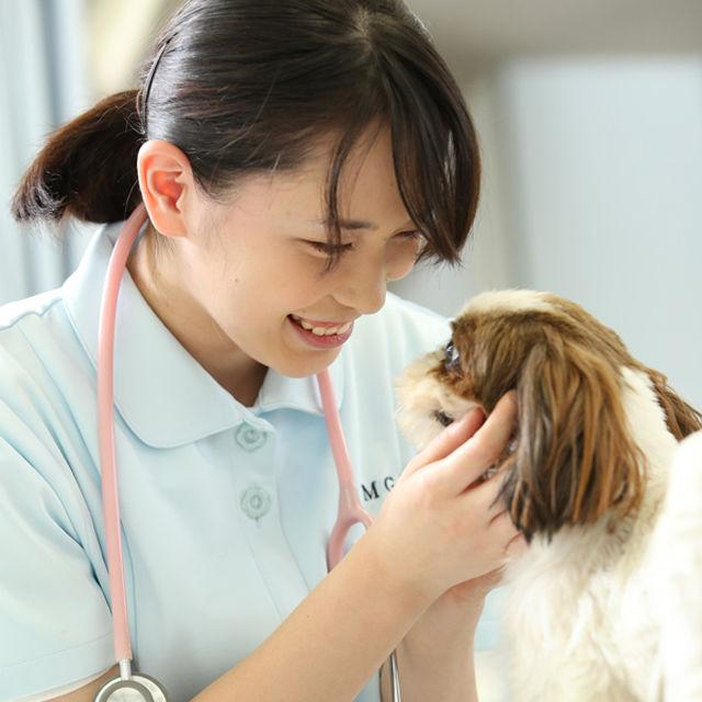 高崎動物専門学校 オープンキャンパス☆ペットのお仕事まるわかり体験1