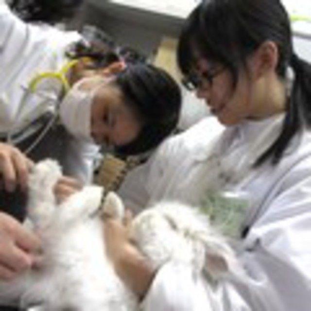 国際ペットワールド専門学校 学校付属動物病院で受付・診察補助・検査をやってみよう!2