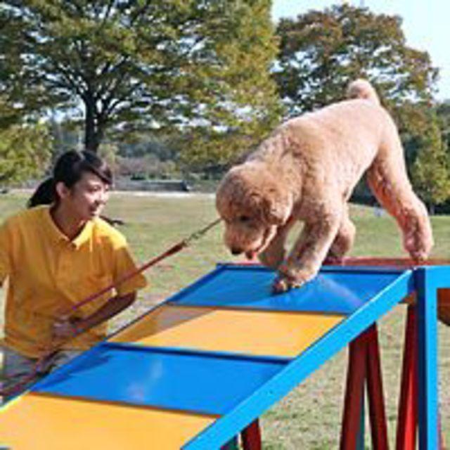 専門学校セントラルトリミングアカデミー 『ドッグトレーニング』体験+ペットクッキング1