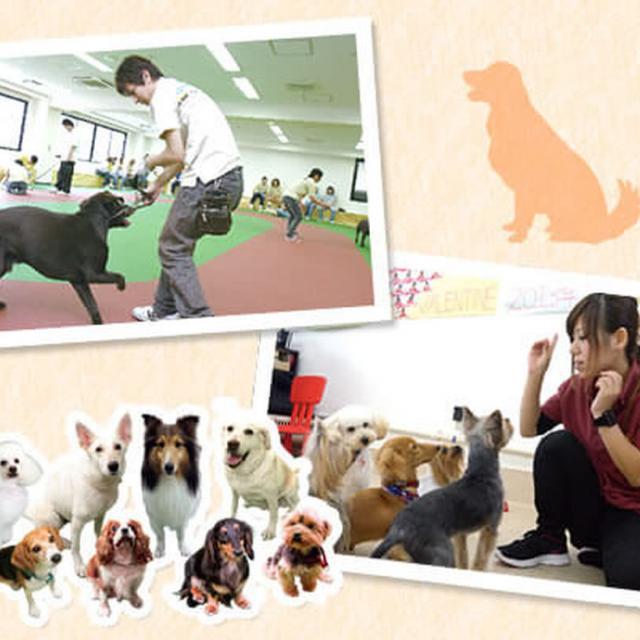大阪ECO動物海洋専門学校 ドッグトレーナーのお仕事体験【家庭犬】1