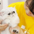 大阪ビジネスカレッジ専門学校 ねこちゃんを初めて扱う人でも大丈夫★ねこちゃんの看護体験!
