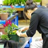 初夏の花で寄せ植えづくりの詳細
