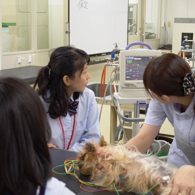 湘央生命科学技術専門学校 カワイイわんこがお出迎え!動物看護師☆オープンキャンパス2