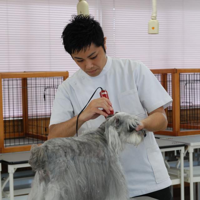 京都動物専門学校 トリマーのカット技術を目の前で!カット実演&トリミング体験!2