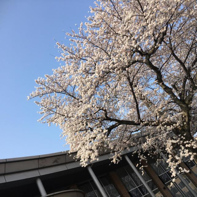 開智国際大学 11/17 オープンキャンパス 特待入試 問題説明会開催!!2