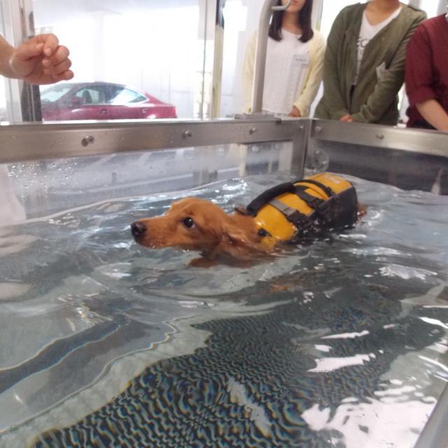 九州動物学院 第11回 竜之介動物病院と九動をもっと知ろう!2