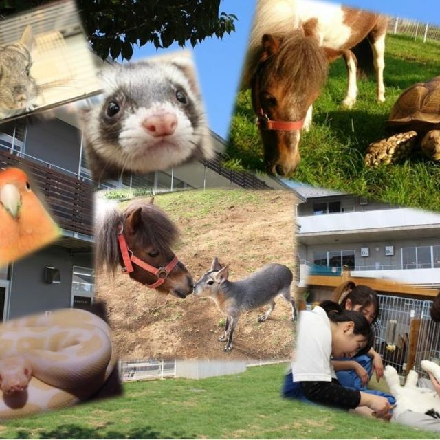 専門学校ちば愛犬動物フラワー学園 コース別オープンキャンパス3