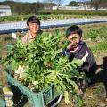 オイスカ開発教育専門学校 冬野菜、収穫してみませんか?12月のオープンキャンパス