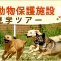 大阪ECO動物海洋専門学校 犬の保護施設 見学ツアー!