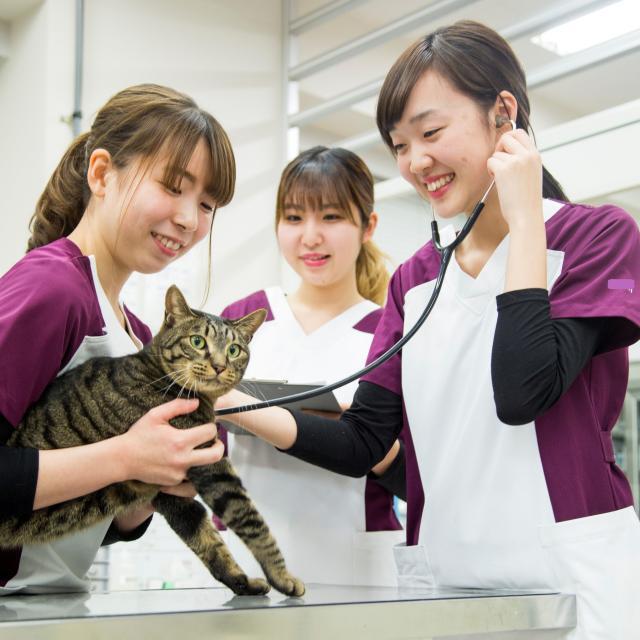 北海道エコ・動物自然専門学校 【動物看護師お仕事体験!】エコの動物たちと触れ合える!1