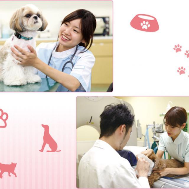 名古屋ECO動物海洋専門学校 【動物看護師】1