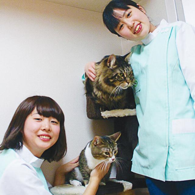 大阪ECO動物海洋専門学校 【動物看護師体験】ネコちゃんの看護師さん体験1